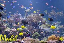 Pesci acquario marino | Saltwater fish