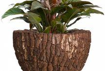 Webshop / Het assortiment van Plant & Pot is uniek. We leveren grote kamerplanten en grote potten. Alle producten zijn met zorg gekozen en komen uit de beste collecties van dit moment. Ons assortiment vullen we regelmatig aan met nieuwe producten.