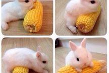 Cute stuffs / Cute stuffs