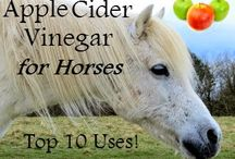 Horse care / Apple cider