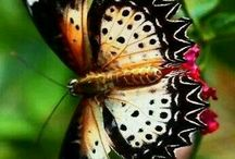 Beautyful Butterfly