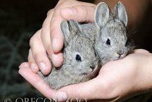 Pygmy Critters