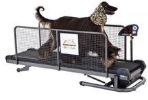 Tapis de course pour chien
