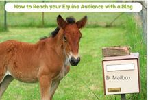 Equine Marketing Blog Posts / Read some of our favorite blog posts on equine marketing, branding, we development and social media management.