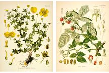botanical prints / botanical prints