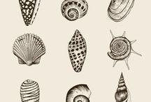 Aquatic sleeve (leg) / Aquatic marine animals