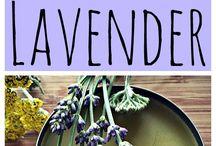 10 Reasons to Grow Lavendar