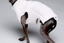 Fashion on dogs