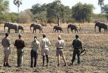 Abenteuer pur - Zu Fuß durch den afrikanischen Busch / Ein besonders intensives Natur- und Tiererlebnis in Afrika bietet die Walking Safari.