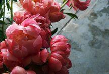 Цветочное вдохновение / Inspiration from flowers