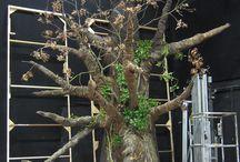 The Pohutukawa Tree and Awatea