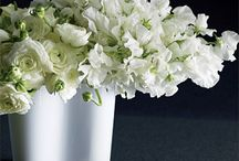 White Flower Arrangements & Bouquets / White flower arrangements, bouquets, centerpieces, event decor, corsages, boutonnieres / by Fly Me To The Moon Florists