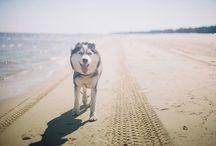 Husky / Love