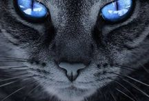 gatti bellissimi