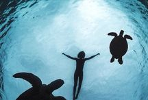 More Turtles / by Jessica LePort