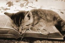 Bookish Cats / Good books and cute cats - two of  my favourite things.