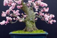 Lovely bonsai