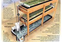 Aquaponic Ideas