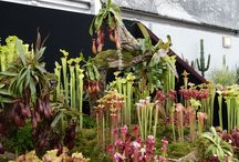 Our hobby always close to mother nature !!! / Chelsea Flower Show 2013