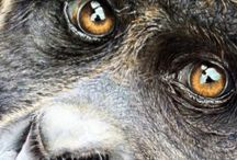My Art / I produce drawings in coloured pencil and graphite of wildlife, pets, and portraits. / by Alan Jones