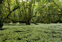 Florida Nature at Its Finest / Experience Everglades Holiday Park for some of the most incredible imagery in the world