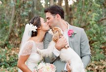 Pets Down the Aisle / Your whole family plays a role in your wedding, make sure they're all included - even the furry ones!