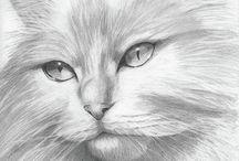 desenhos de animais