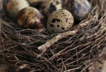 Bird's Nest collection / Who hasn't enjoyed foraging for interesting bits of twigs, feathers and pine cones on a woodland walk?
