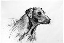 Dog Portraits drawings / Dog charcoal drawings
