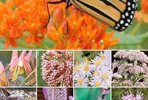 Butterfly Garden / by Naomi Ovando