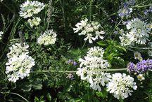 Conseils semis et plantations fleurs