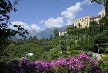 Op Alpenplantensafari in Oostenrijk en Italië / De alpenplantensafari van Garden Tours naar Oostenrijk en de Dolomieten is een groot succes. Prachtige bergen, schitterende flora en 's avonds een hotel waar je heerlijk kunt eten en slapen.