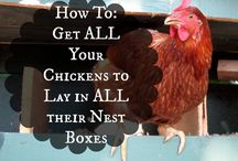 Chookie Tips