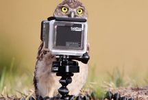 OwlStyle