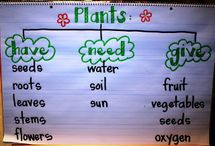 plants / teaching about