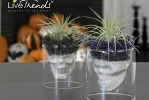 Glass Skull Planters