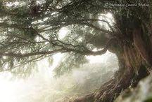Bäume, Laub
