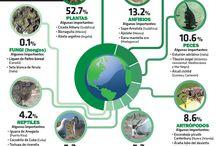 conservacion de especies