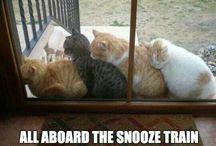 Cats, Cats, Cats ♡