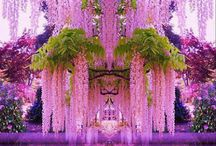 rainbow's flowers decoration