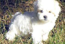 Teddy bear dog...... ♡ / by Desiree Elzinga