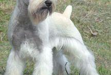 fryzury psie
