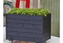 Woodinis Hochbeet Pflanzen, Kräuter Hochbeete / Woodinis Hochbeete mit u. ohne Rankgitter darf in keinem Garten oder auf dem Balkon fehlen. Hochbeete auf Räder, mobil und fahrbar der neue Trend