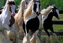 koně ♥