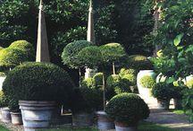 Topiary option