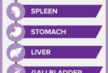 Digestive System - How it Works