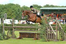 Horsey things...
