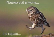Цитаты на Русском / Цитаты на любой вкус
