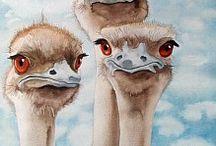 struis vogels