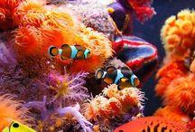 Amezing sea life / Amezing sea life